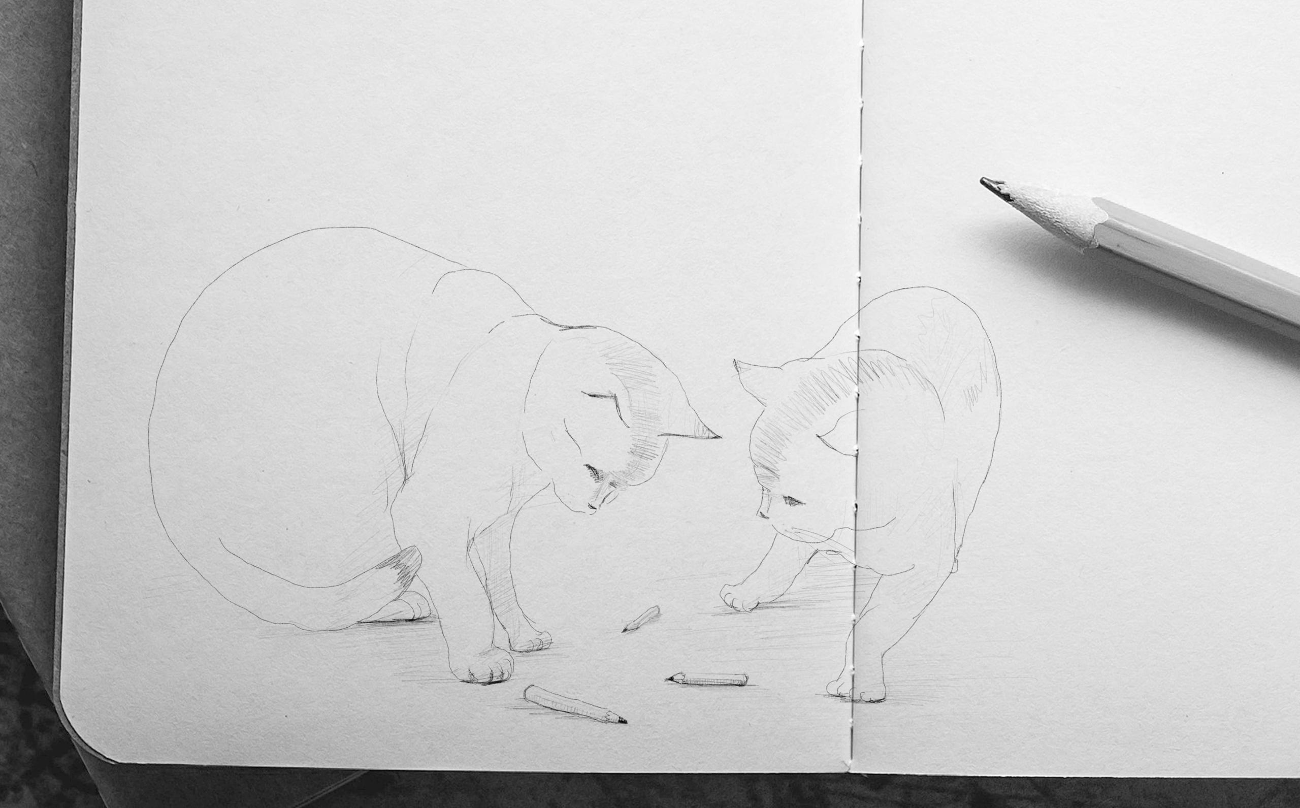 disegno gatti