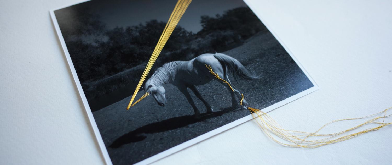 unicorno perduto